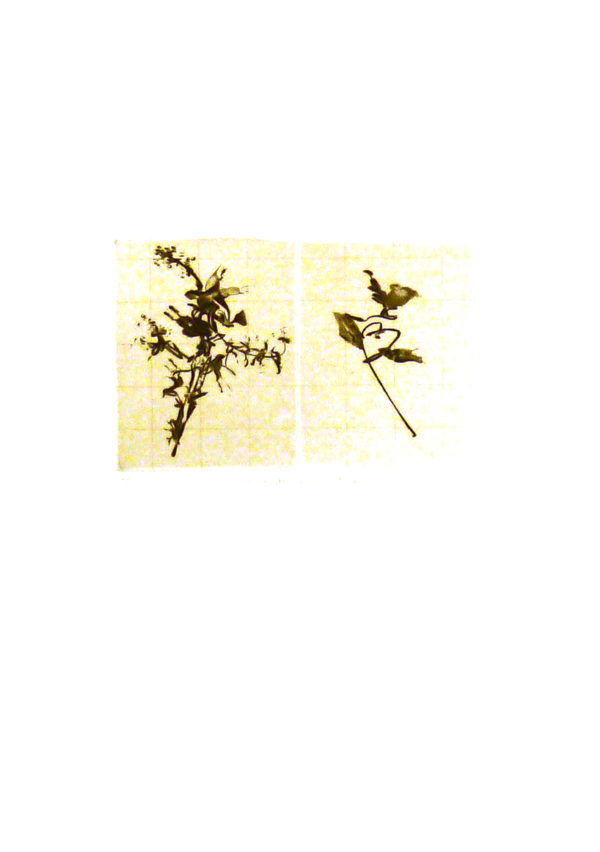 grall-akila-lacs-co-gravure